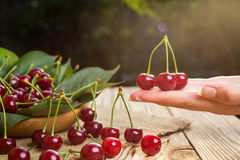 Cereza en la mano Cerezas en cesta en la tabla de madera Cerezas Fotografía de archivo libre de regalías