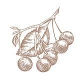 Cereza en la rama stock de ilustración