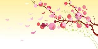 Cereza floreciente - ejemplo Imagenes de archivo