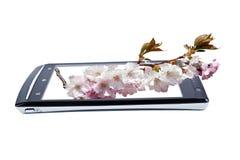 Cereza floreciente en smartphone de la exhibición collage Fotografía de archivo