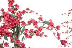 Cereza floreciente japonesa roja imagen de archivo