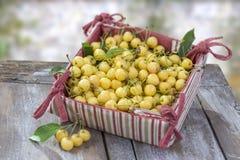 Cereza fresca amarilla con las hojas en la caja de cartón en tela roja y blanca, en viejo fondo blanco de la pintura pedernal vie Imágenes de archivo libres de regalías