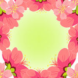 Cereza japonesa y china de la tarjeta Ilustración del vector Imagen de archivo