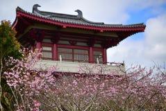 Cereza que florece fuera de un templo chino en Auckland Fotografía de archivo