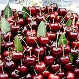 Cereza roja Fotografía de archivo libre de regalías