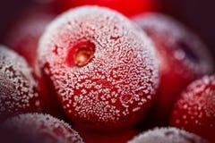 Cereza roja congelada Imágenes de archivo libres de regalías