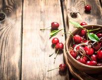Cereza roja en la herramienta de la taza y del metal para las cerezas Imágenes de archivo libres de regalías