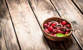 Cereza roja en la herramienta de la taza y del metal para las cerezas Fotos de archivo libres de regalías