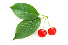 Cereza roja en las hojas verdes Foto de archivo