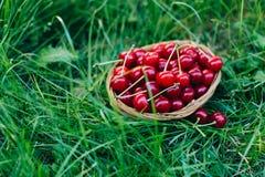 Cereza roja en una cesta de madera Fotografía de archivo