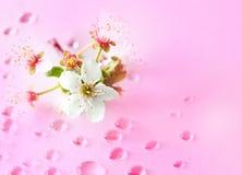Cereza y agua fotografía de archivo