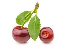 Cereza y hojas Cerezas rojas maduras aisladas en el fondo blanco Imagen de archivo