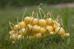 Cerezas amarillas en la hierba Fotos de archivo