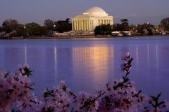 Cerezas del monumento de Jefferson Foto de archivo