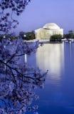 Cerezas del monumento de Jefferson Imágenes de archivo libres de regalías