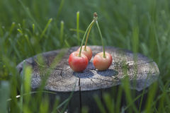 Cerezas del verano en la madera Fotos de archivo libres de regalías