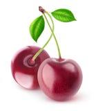 Cerezas dulces aisladas imagen de archivo libre de regalías