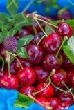 Cerezas dulces y trébol rojos maduros frescos en una servilleta azul Frutas de la cereza en un jardín en verano Profundidad del c foto de archivo