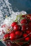 Cerezas en agua Fotos de archivo