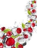 Cerezas en chapoteo del agua en el fondo blanco Imagen de archivo