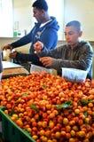 Cerezas en el mercado de lugar de Pike Imagen de archivo