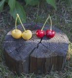 Cerezas en la madera Fotografía de archivo libre de regalías