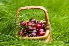 Cerezas en una cesta en hierba del verano Fotos de archivo
