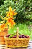 Cerezas en una cesta y daylily de las flores Fotos de archivo libres de regalías