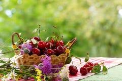 Cerezas en una cesta y flores del bosque cerca Fondo verde enmascarado Imagen de archivo