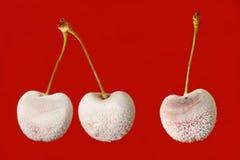 Cerezas frescas Imagen de archivo libre de regalías