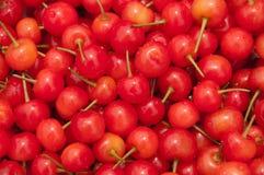 Cerezas frescas Foto de archivo libre de regalías