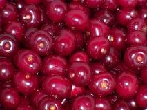 Cerezas jugosas rojas Foto de archivo libre de regalías