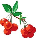 Cerezas maduras jugosas rojas