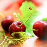 Cerezas rojas Fotografía de archivo libre de regalías