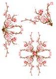 Cerezo chino japonés de Sakura Foto de archivo