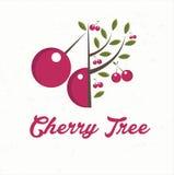 cerezo con la fruta de la cereza Imagen de archivo libre de regalías