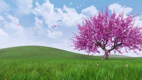 Cerezo de Sakura en flor con los pétalos que caen 4K ilustración del vector