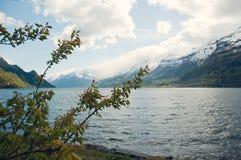Cerezo en el backgound de las montañas noruegas fotos de archivo
