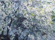 Cerezo floreciente Foto de archivo