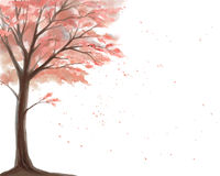 Cerezo floreciente en un fondo blanco Imagen de archivo libre de regalías