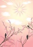 Cerezo y pájaros del flor. Imagen de archivo