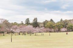 Cerezos en Nara en primavera imagen de archivo libre de regalías