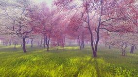 Cerezos florecientes en luz del sol libre illustration