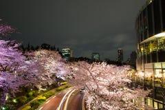 Cerezos iluminados a lo largo de la calle en el Midtown de Tokio, Minato-Ku, Tokio, Japón en la primavera, 2017 imagen de archivo