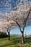 Vancouver en primavera fotografía de archivo libre de regalías