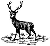 cerf-001 Royalty Free Stock Photos