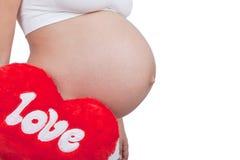 Cerf rouge de prise de femme enceinte avec amour dans des mains Photos libres de droits