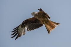 Cerf-volant rouge Image libre de droits