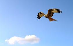 Cerf-volant rouge en vol Photos libres de droits