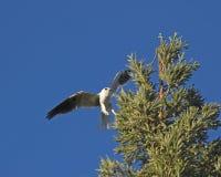 Cerf-volant suivi blanc Photos stock